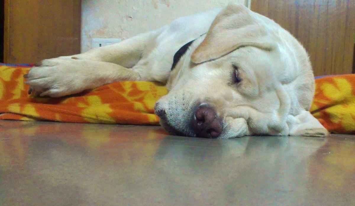 Dog Days Forever. 🐩
